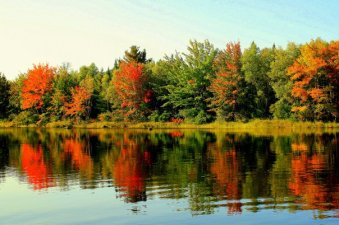 Formidable fall foliage