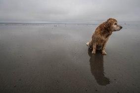 dog friendly North Beach